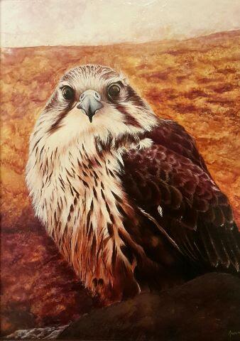 Dipinti animali 'Falco' olio su tela e tavola