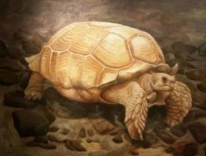 'La vecchia tartaruga' dipinto a secco su intonac